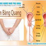 Tổng Quan Viêm Bàng Quang Và Nguyên Nhân Viêm Bàng Quang