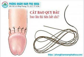 cat-bao-quy-dau-bao-lau-thi-tieu-het-chi